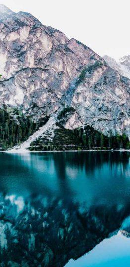 daylight-forest-glossy-443446